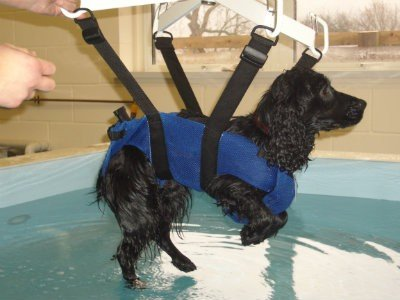 Canine Hydrotherapy Clinic